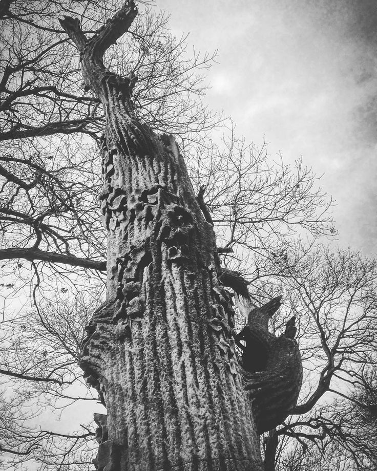 art imitates nature - tree monument Rosehill Cemetery Chicago by aceymann