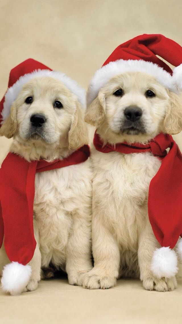 1286 best Santas Dogs and Puppies... images on Pinterest   Animals ...