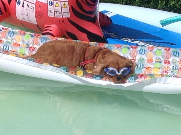 Roeby in het zwembad.