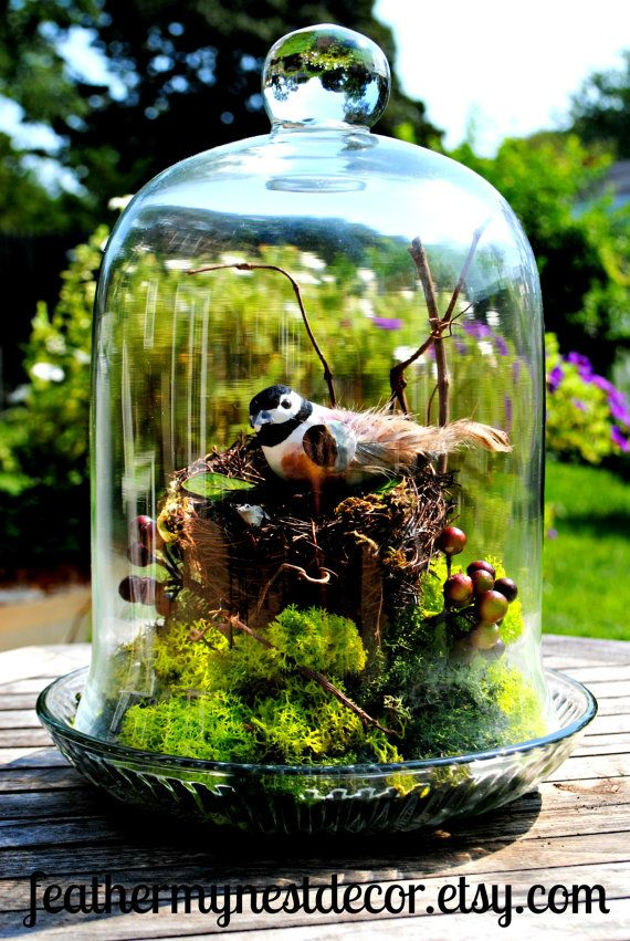 Bird & Nest Under Cloche by The Decorated Nest (formerly FeatherMyNestDecor on Etsy) $65.00