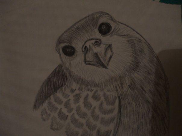 small bird..wish i knew wat type