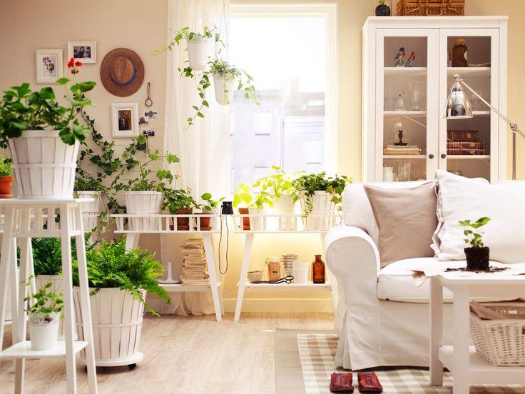 Обзор живых растений в интерьере, каким образом использовать их в различных комнатах, как сделать частью интерьера, выгодно подчеркивая все достоинства.