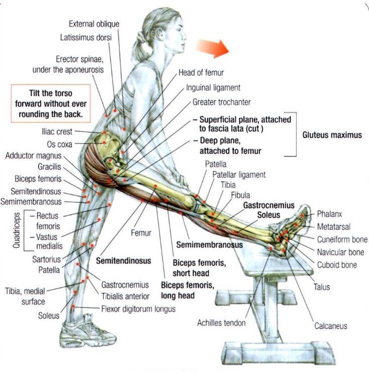 Physio lab exercise 3 activity 5 6 7