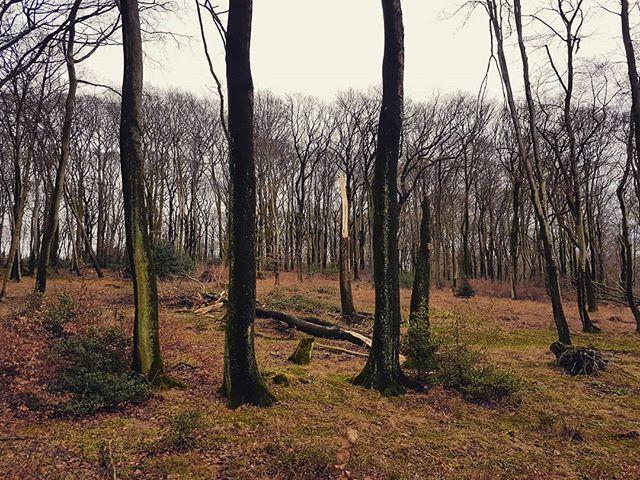 Reposting @ingovogelmann: #orkan #sturm #friederike #storm #winter #unwetter #nature #germany #wind #feuerwehr #frederike #orkanfriederike #trees #weather #naturephotography #forest #wood #natur #wetter #sturmtief #nrw #2018