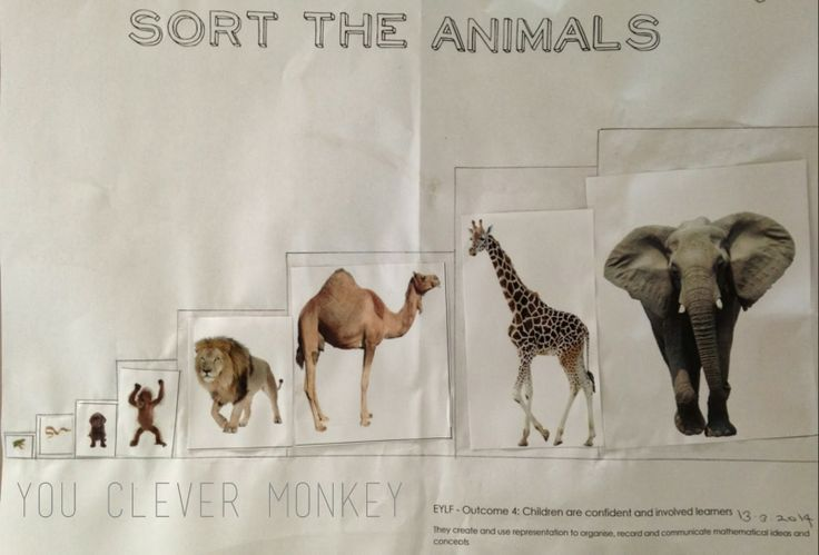 Dear Zoo - sort the animals - smallest to biggest from the book #youclevermonkey