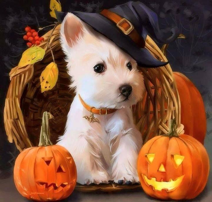 Fall Pug Wallpaper 143 Best Halloween Cats Amp Dogs Images On Pinterest