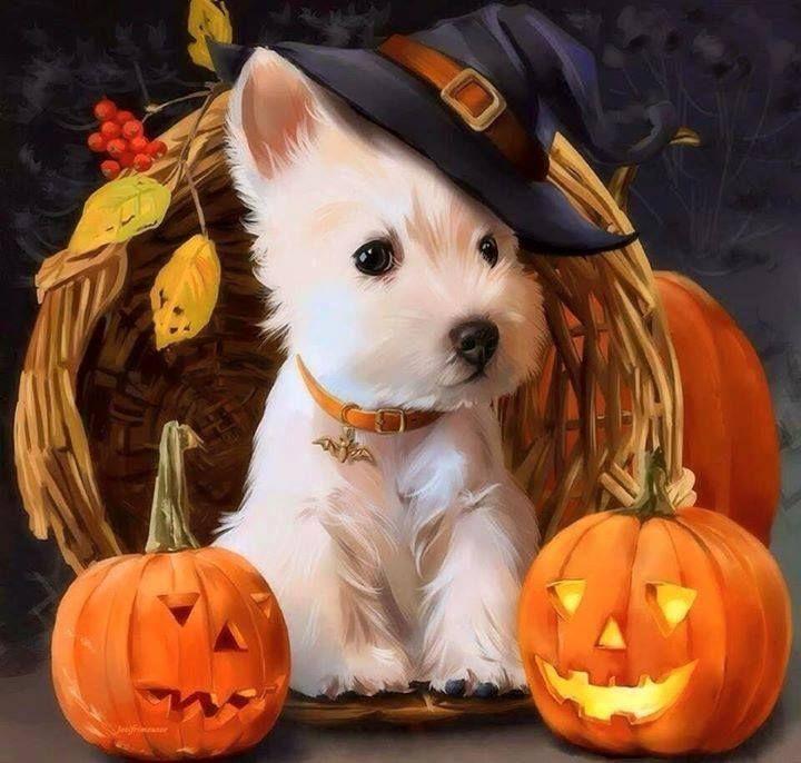 Halloween westie