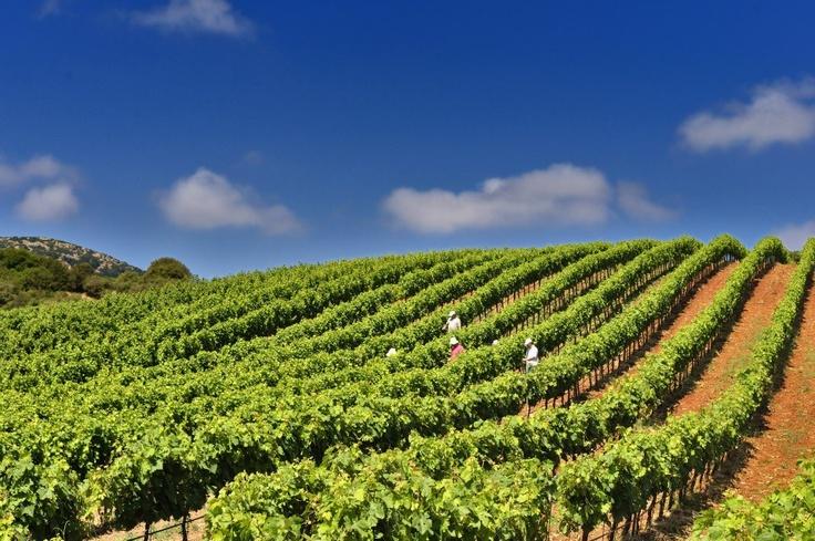 TRAVEL'IN GREECE | Antonopoulos Vineyards, #Greece, #travelingreece