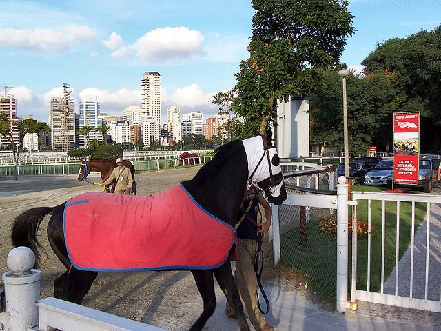 25 best race horses images on pinterest race horses running race horses at the sao paulo race track here you will find horse racing systems publicscrutiny Gallery