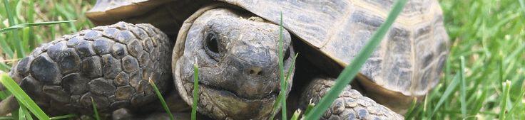 Construire un enclos pour tortue