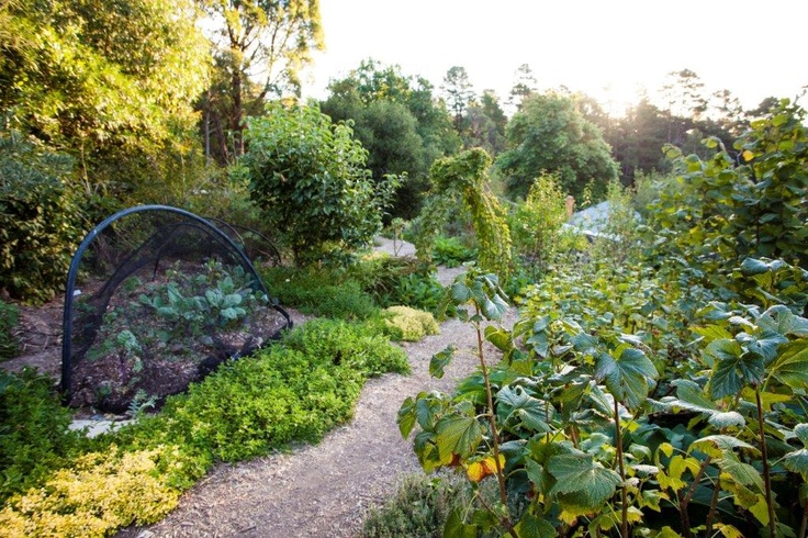 Food Forest at St Erth