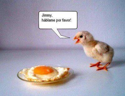 Imagenes de Animales graciosas - Taringa!