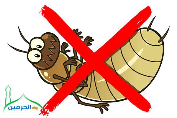شركة مكافحة النمل الابيض بجدة 0534910233 الشركة الأولى في مكافحة النمل الابيض بجدة Character Disney Characters Tigger