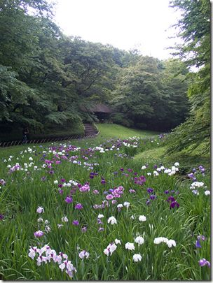27 best Irises images on Pinterest | Beautiful flowers, Gardening ...