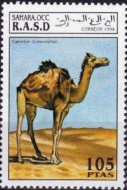 Stamp: Dromedary (Camelus dromedarius) (Cinderellas) (Sahara Occ.) Col:EH 1994084