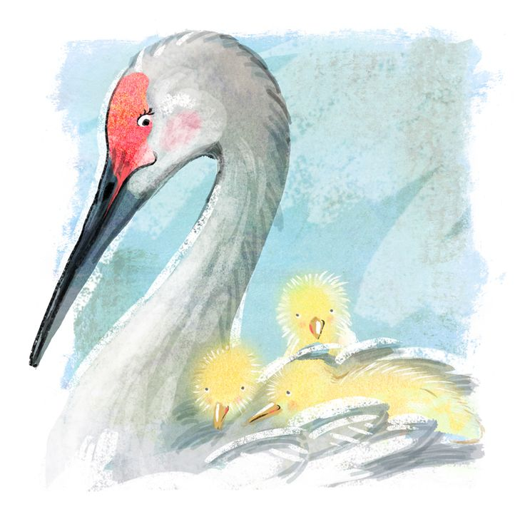 Cosy 'n warm - whooping crane Mum 'n chicklets. Created for animal alphabets submission on twitter.