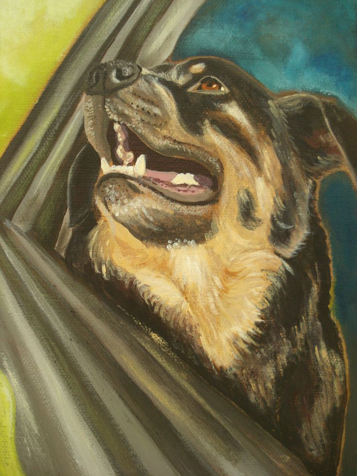 "SOLD ""Minnie"", 6"" x 8"" Canine co-pilot for Mid-Island Ink Depot http://inkdepot.ca/ Painted by Pauline Dueck #dogportraits"