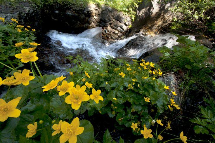 #Sommer #Natur (c) Bildkreis