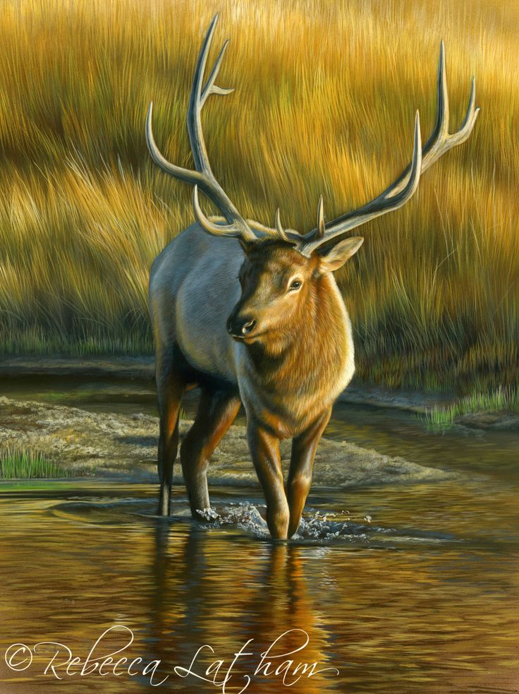 river passage bull elk 9 x12 watercolor on board rebecca latham whistle pik galleries in. Black Bedroom Furniture Sets. Home Design Ideas