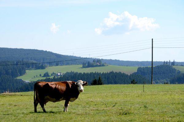 http://elpachinko.com/viajes-a-alemania/selva-negra-consejos-para-viajar/  Buenos días! Empezamos el finde con diez consejos para viajar a la Selva Negra, un destino de Alemania que enamora