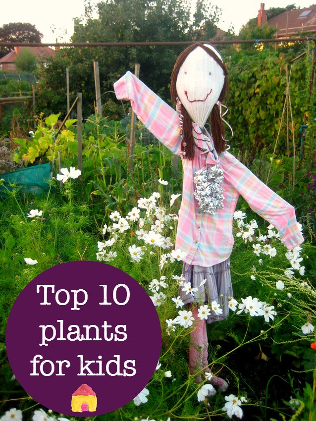 top ten easy plants to grow with kids :: kids gardening projects :: allotments