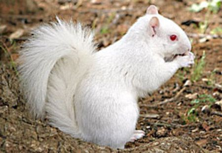 Squirrel: Animal Pics, Animal Pictures, Amazing Albino, Albino Squirrels, White Squirrels, God Creatures, Squirrels Albinosquirrel, Adorable Animal, Albino Animal