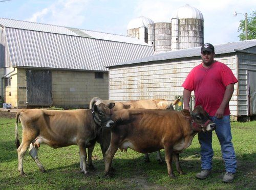 """Quote: """"Mini Jersey cow. They are actually the original size of Jerseys. The larger ones were bred to be bigger for the dairy industry.""""   no way!"""