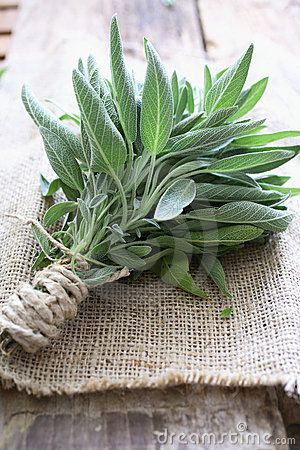 Sage: Add it to your campfire or fire pit keeps mosquitoes and bugs away.