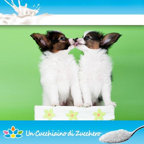 Un po' di dolcezza con questi cuccioli che si danno un bacio!