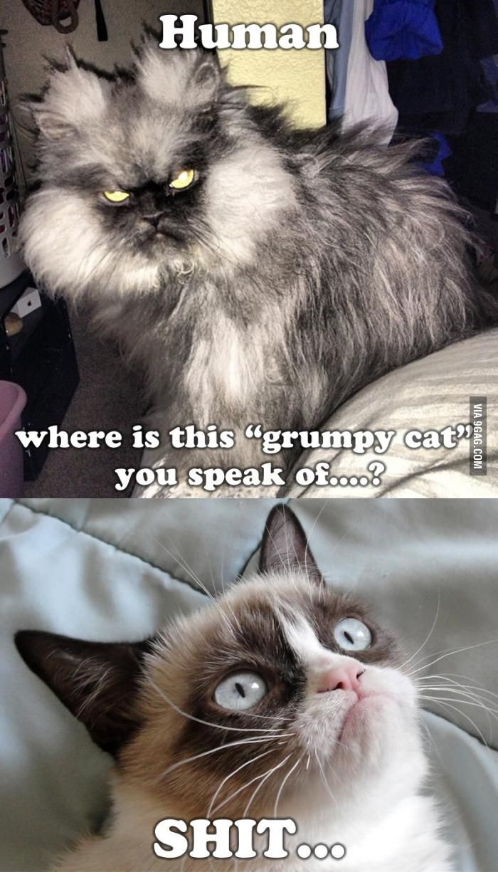 "Where is this ""Grumpy cat"" you speak of?"