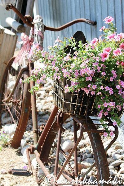 piha,puutarha,pihan istutukset,kesäkukat,roosat kukat