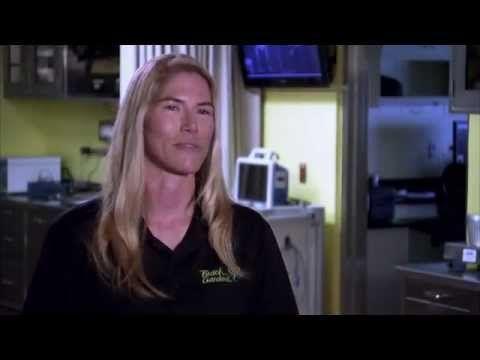 The Wildlife Docs -  Dr. Dominique Keller   Busch Gardens Tampa Bay - YouTube