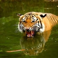 Common Mistakes in Wildlife and Nature Photography. Author: Andrew Goodall. Photo captured by ahmad reedzuan. http://www.picturecorrect.com/tips/common-mistakes-in-wildlife-and-nature-photography/
