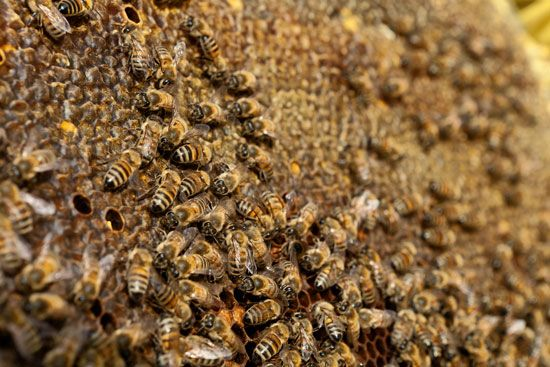 How to Keep Bees: Getting Through the First Season      Read more: http://www.grit.com/animals/how-to-keep-bees-ze0z1303zgar.aspx#ixzz2Sx5p2DDk