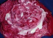 Salát z červené řepy s křenem a jogurtem