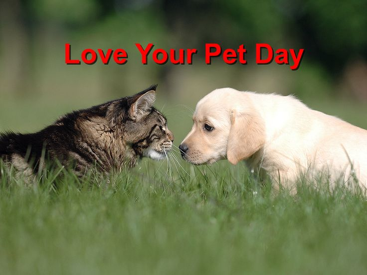 Love Your Pet Day http://championwoodvet.com/wp-content/uploads/Love-Your-Pet-Day.jpg On February 20th of every year, pet lovers from all parts of the United States of America observe what has come to be known as the National Love Your Pet Day. This is an unofficial national holiday that is set aside for pet lovers to attend to and pamper any of their pets. If you are a pet lover... http://championwoodvet.com/social/love-your-pet-day/
