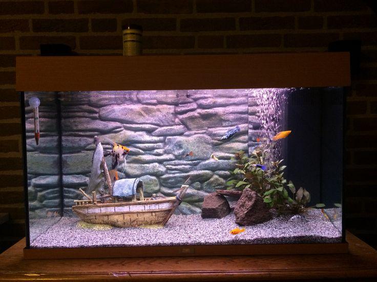 Koi maanvissen in tropisch zoetwateraquarium