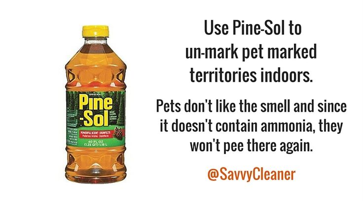 #Petcare #Pettips #PineSol #Bounty #Cleaning #Cleaningup  #Cleaningtips #Cleaninghacks