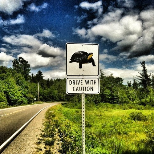 Road sign on Kejimkujik Drive (Route 8) between Liverpool and Annapolis Royal, Nova Scotia. The region is home to a significant population of rare Blanding's Turtles.