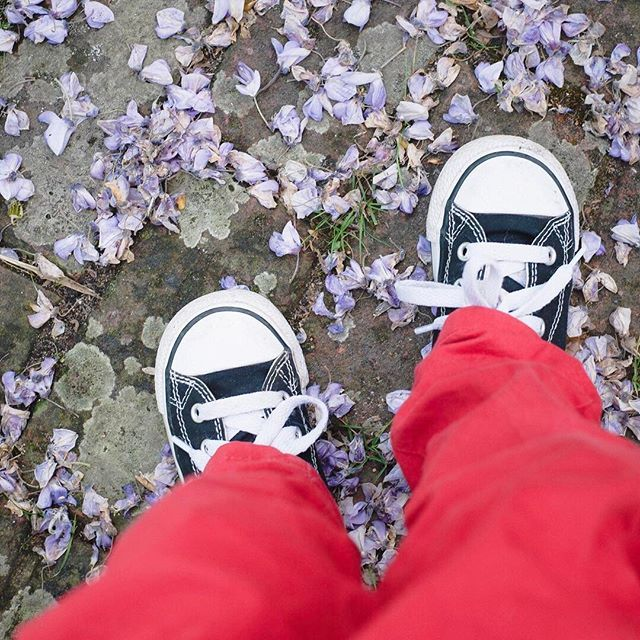 "The shoes-on-a-carpet-of-petals shot is an Instagram perennial, I know... but aren't these little feet sweet in their tiny Converse? 💜 Edward, for reasons known only to him, calls these his ""run run shoes"", and whenever I go for a run (very rarely) asks if he can put on his run run shoes and come too. 💜 #littlefamiliesofig"