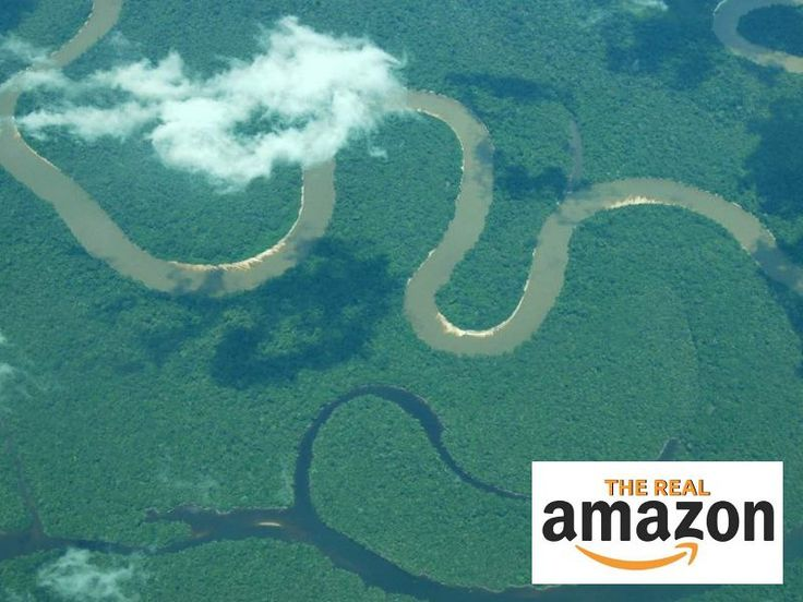 Amazon.com founder Jeff Bezos recently announced that he wants to give something back after years of making millions, and he asked for ideas. We've got an idea for him: Help protect the river and rainforest that inspired his company's name!