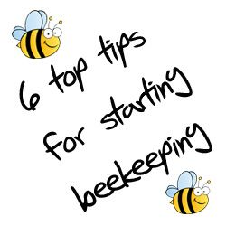 How do I start beekeeping in 6 easy steps