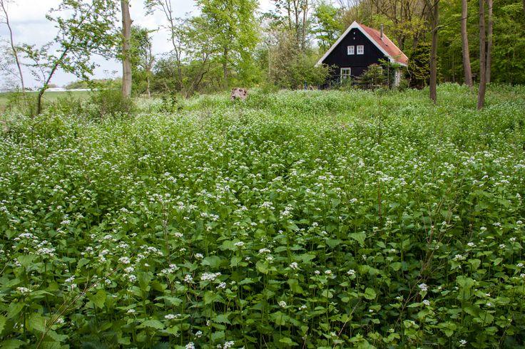 Staelduinse bos Look zonder Look