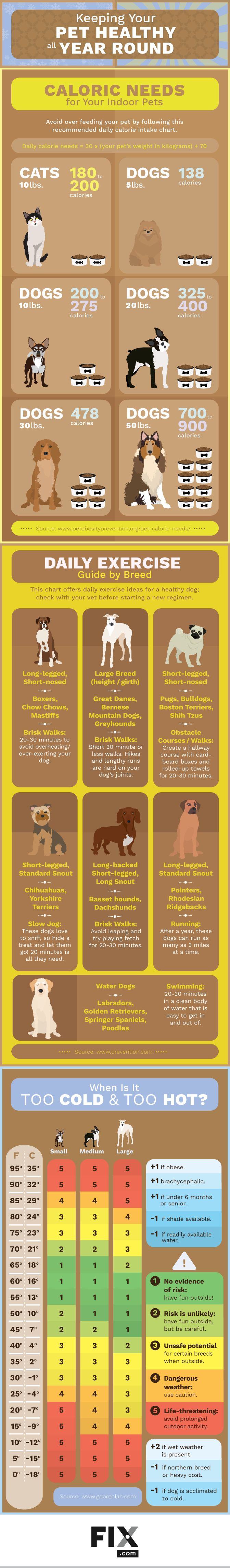 How to Keep Your Pet Healthy All Year Round #Infographic #Animals #Pets