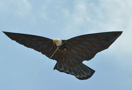 Bald Eagle Kite with 5 Ft Wingspan