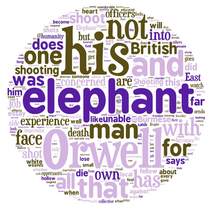 essay questions shooting an elephant