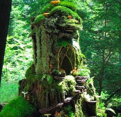 Looks like someone moved into this old stump....