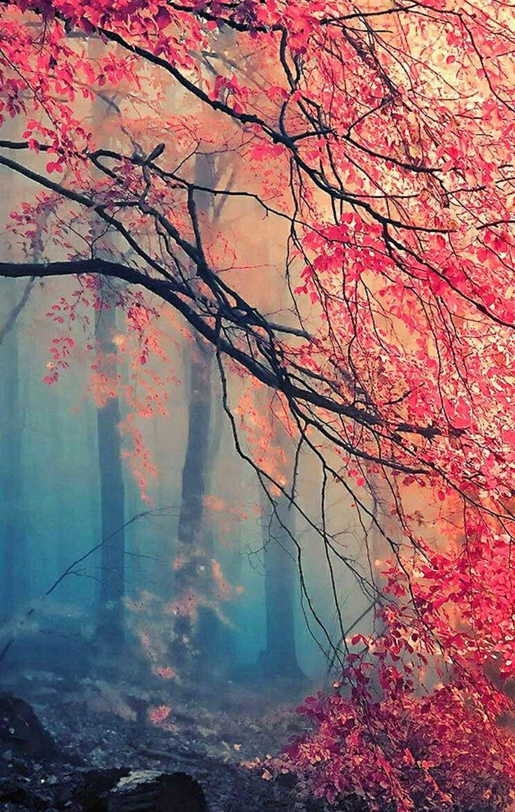 tree autumn iphone wallpaper | iPhone Wallpapers | Pinterest