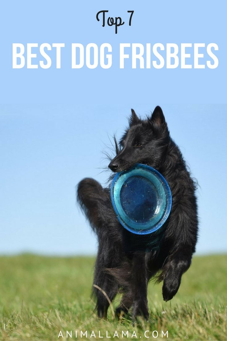 Best Dog Frisbee For Chewers