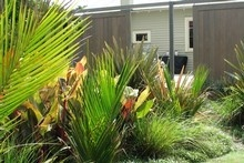 NZ Native Garden Suggestions